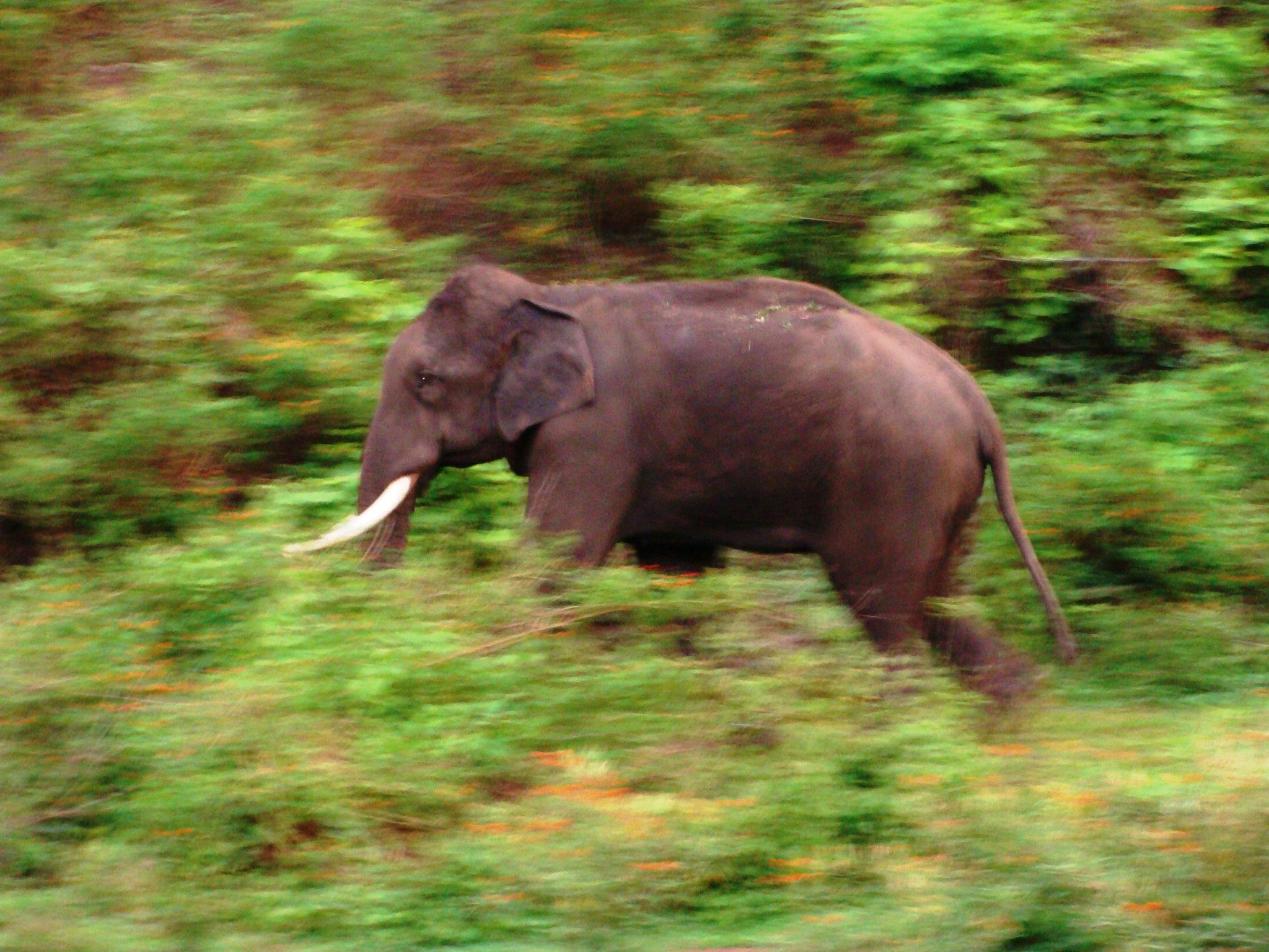 Wildlife Top Slip Elephant