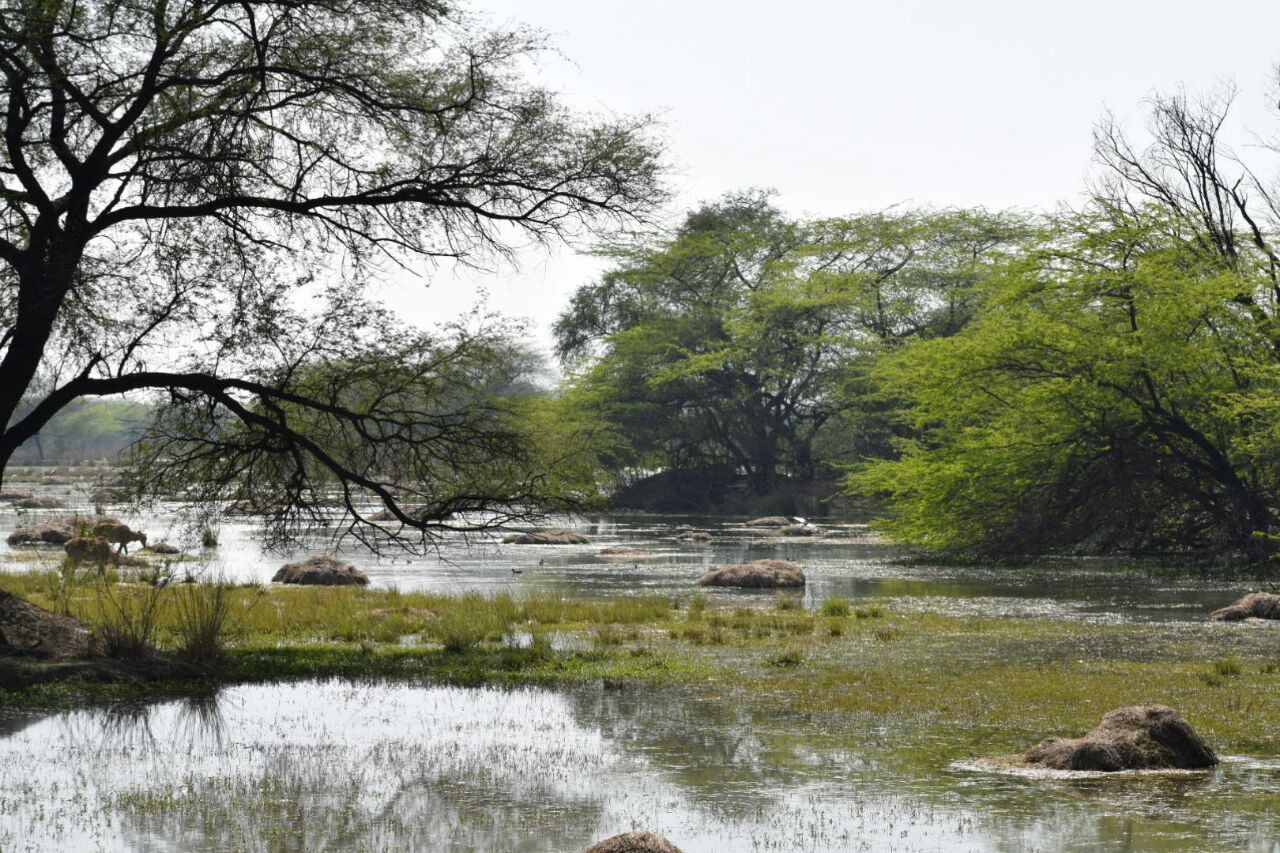 Sultanpur Jheel